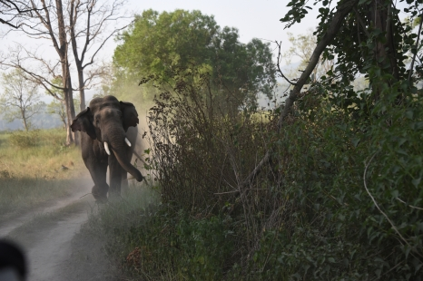 Tusker Still Charging; Photo Burst by Pooja Parvati