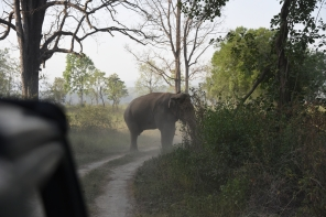 Tusker; Photo by Pooja Parvati