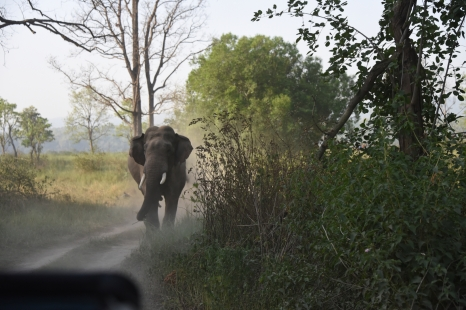 Charging Tusker; Photo by Pooja Parvati